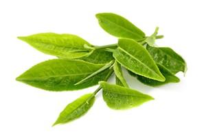 Il profumo di foglie di thè nei vini