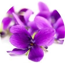Il profumo di violetta nei vini