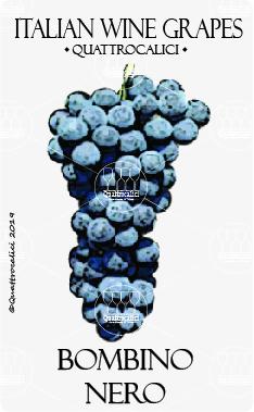 bombino nero vitigno