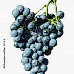 forgiarin vitigno