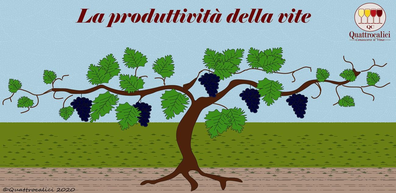 produttività della vite