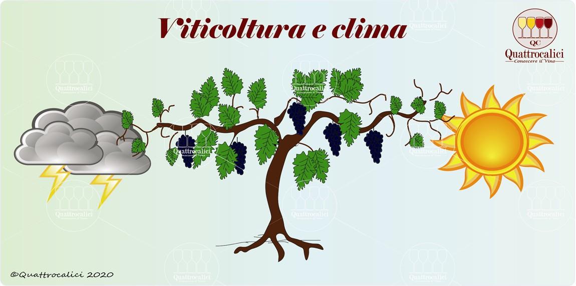 la viticoltura e il clima