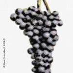 agiorgitiko vitigno
