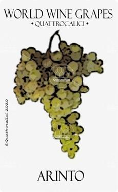 vitigno arinto