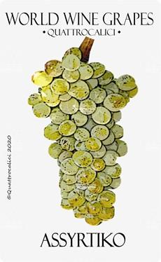 assyrtiko vitigno