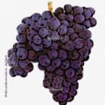 baga vitigno