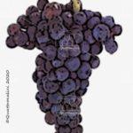 castelao vitigno