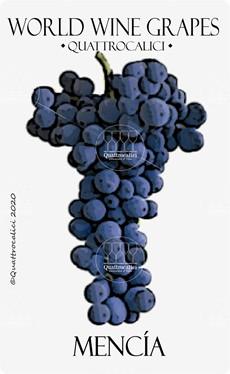 vitigno mencia