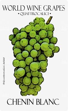 chenin blanc vitigno