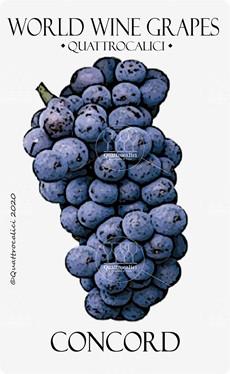 concord vitigno