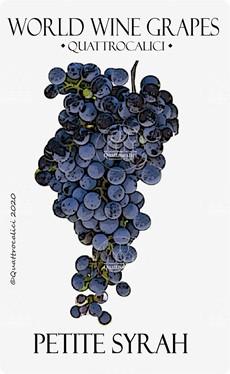 petite syrah vitigno