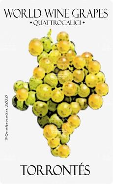 torrontes vitigno