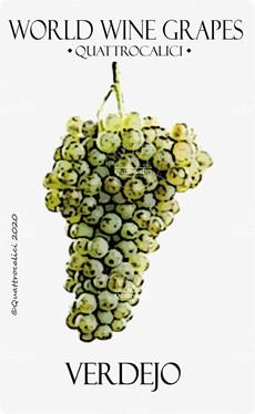 verdejo vitigno