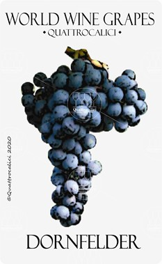 dornfelder vitigno