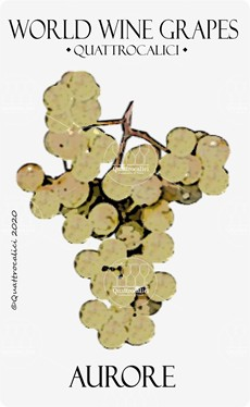 aurore vitigno