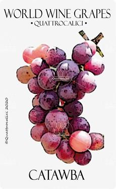 catawba vitigno