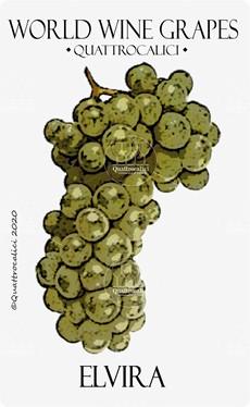 elvira vitigno