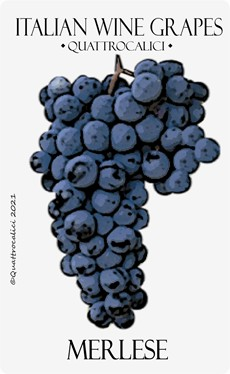 merlese vitigno