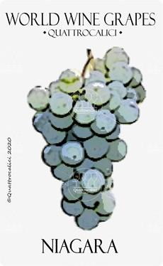 niagara vitigno