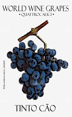 tinto cao vitigno