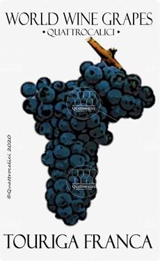 touriga franca vitigno
