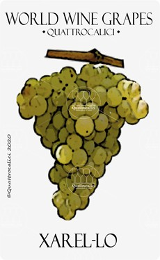 xarel-lo vitigno