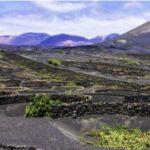 vini vulcanici