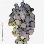 cereza vitigno
