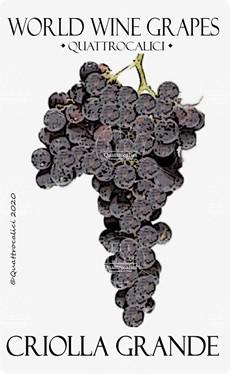 criolla grande vitigno