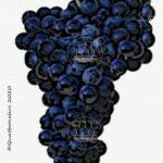 feteasca neagra vitigno