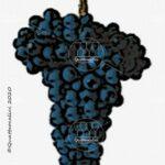 trincadeira vitigno