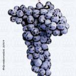 abrusco vitigno