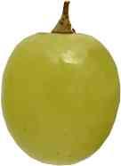 acino uva