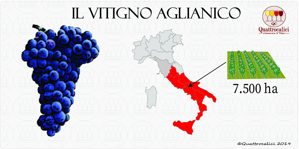 aglianico vitigno