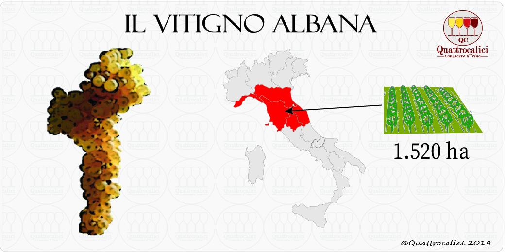 albana vitigno