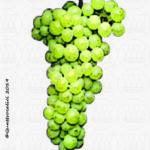 vitigno albarola