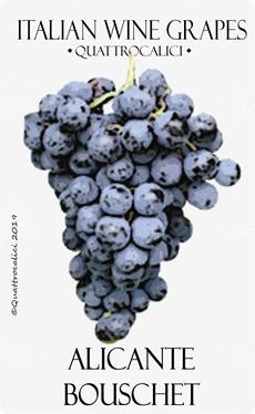 vitigno alicante bouschet