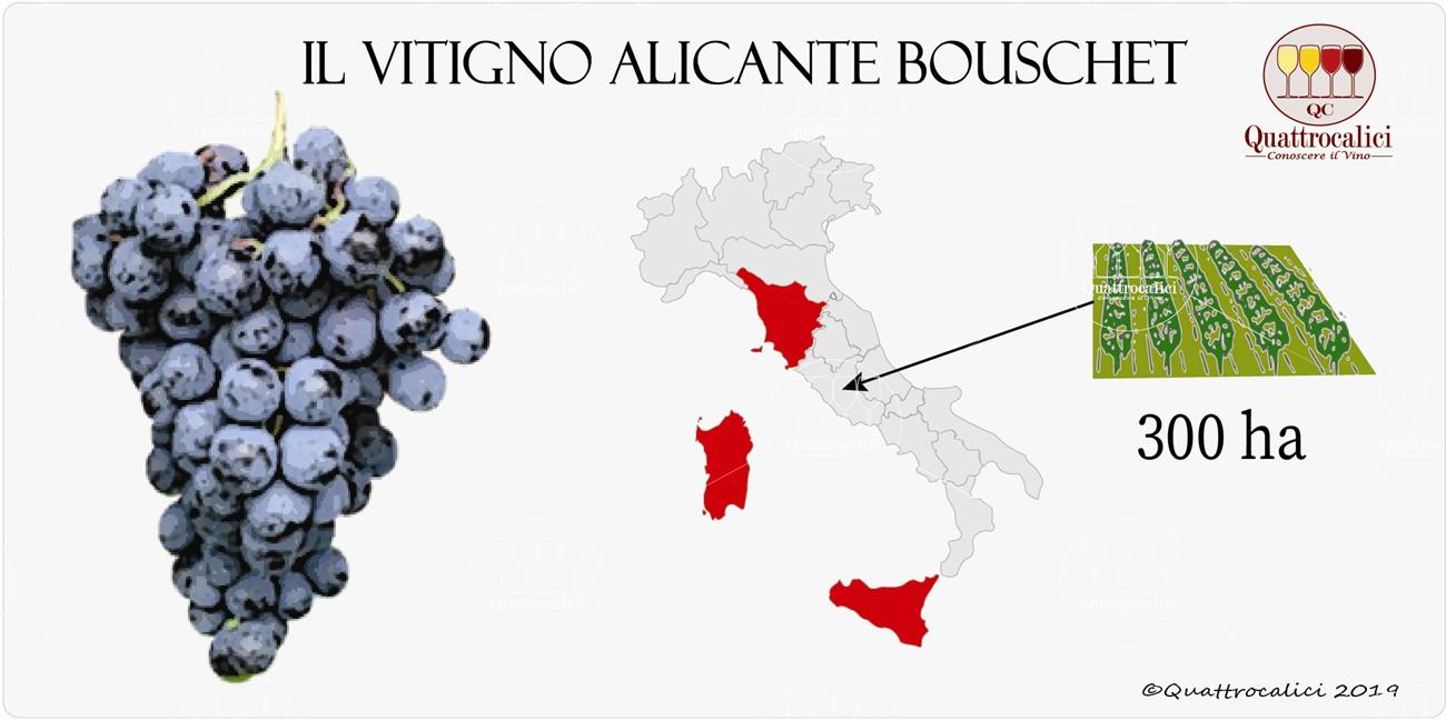 alicante bouschet vitigno