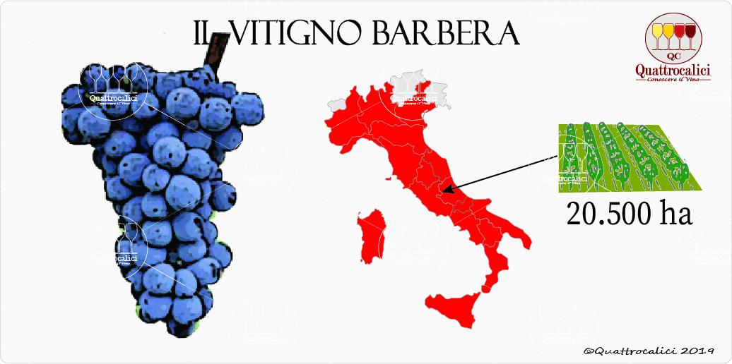vitigno barbera