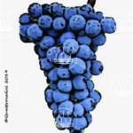 barbera vitigno