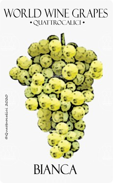 bianca vitigno