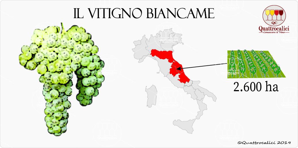 vitigno biancame