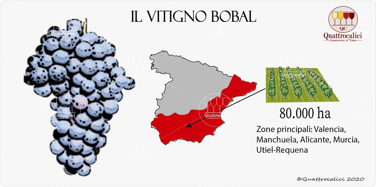 bobal vitigno