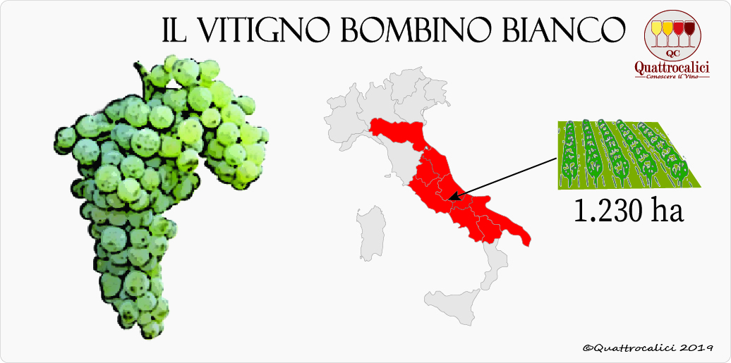 vitigno bombino bianco