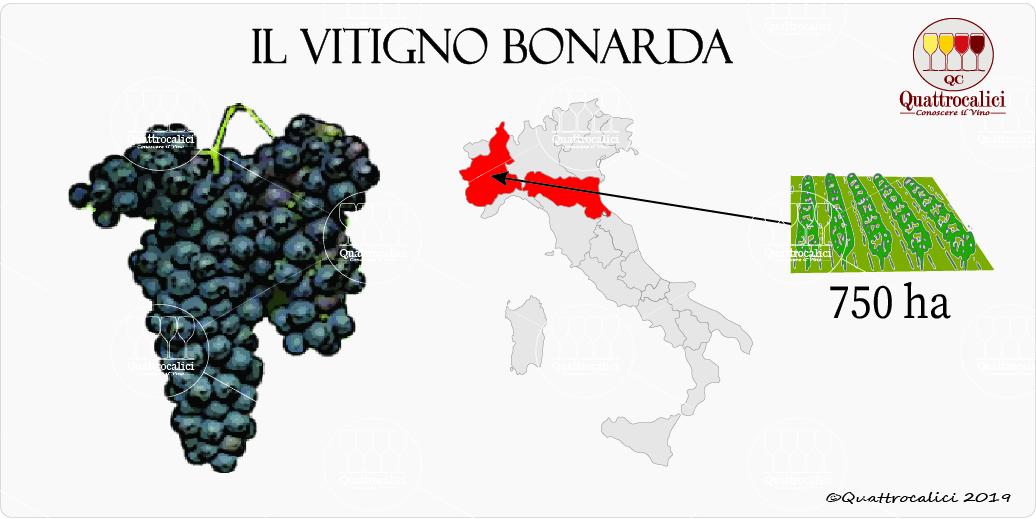 vitigno bonarda