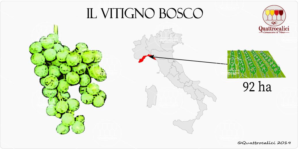 vitigno bosco