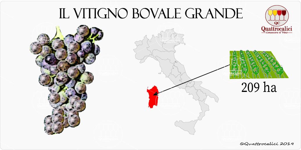 vitigno bovale grande