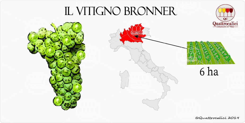 vitigno bronner