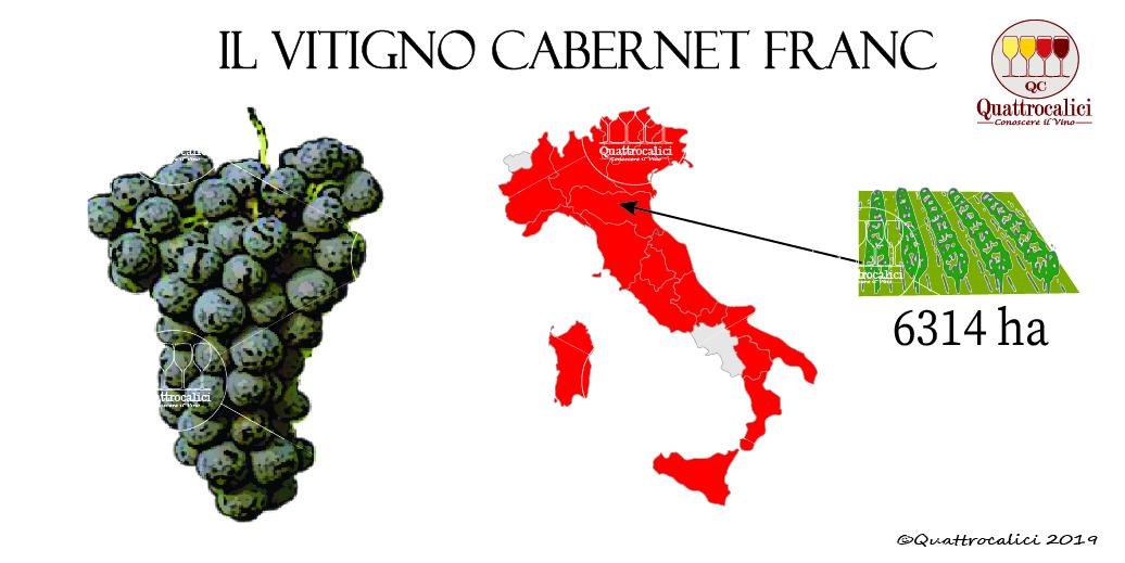 vitigno cabernet franc
