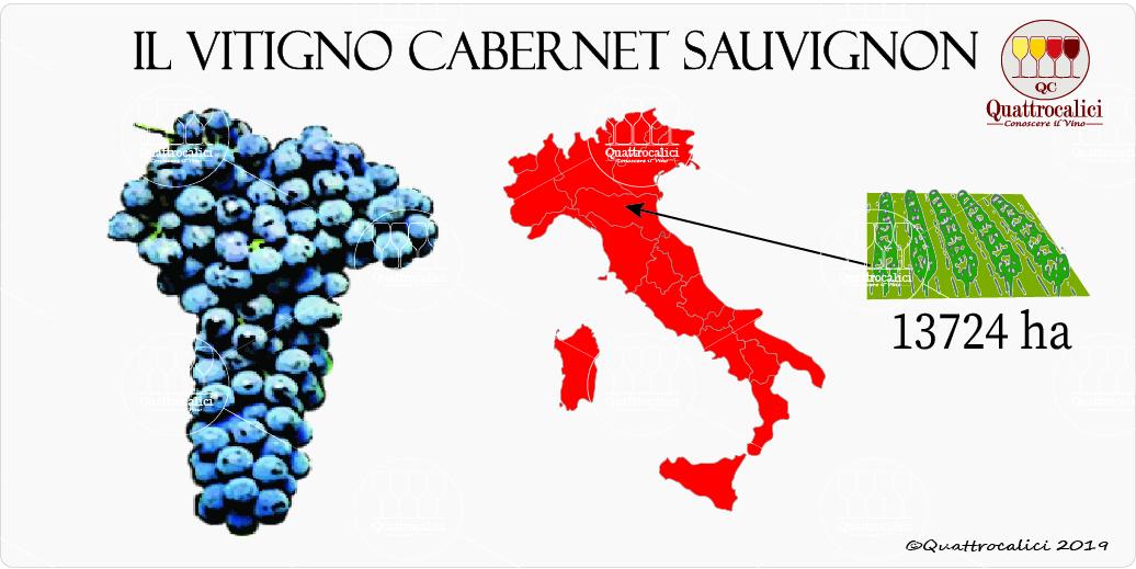 vitigno cabernet sauvignon